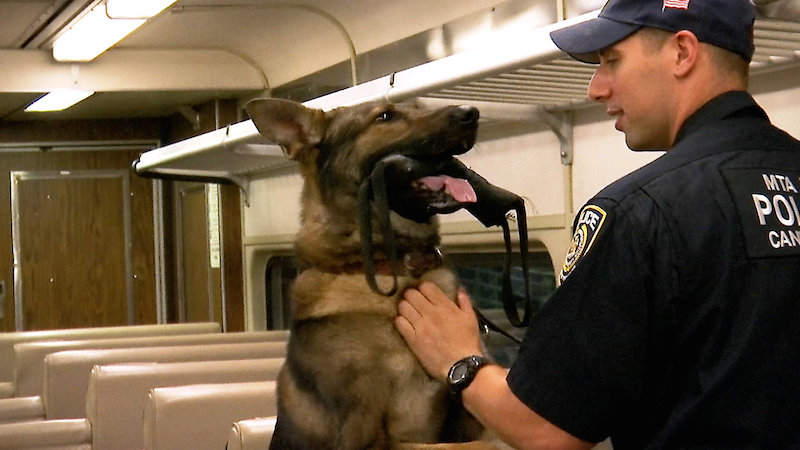Blog Post 2 Image MTA K9 Officer