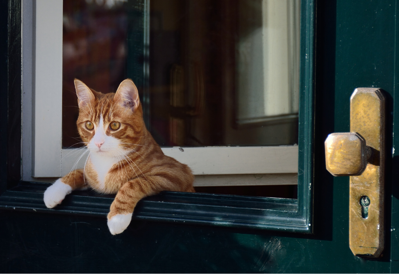 Cat Hanging Out Window